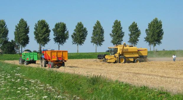 Francja oczekuje bardzo dużych zbiorów pszenicy