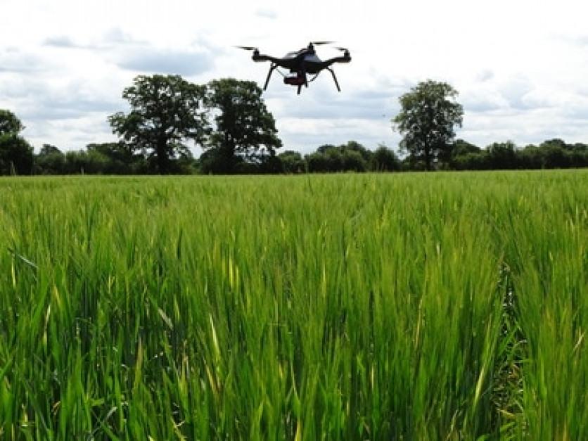 Do pobierania próbek roślin, gleby i obserwacji tego, co się dzieje na polu, naukowcy używali dronów ...