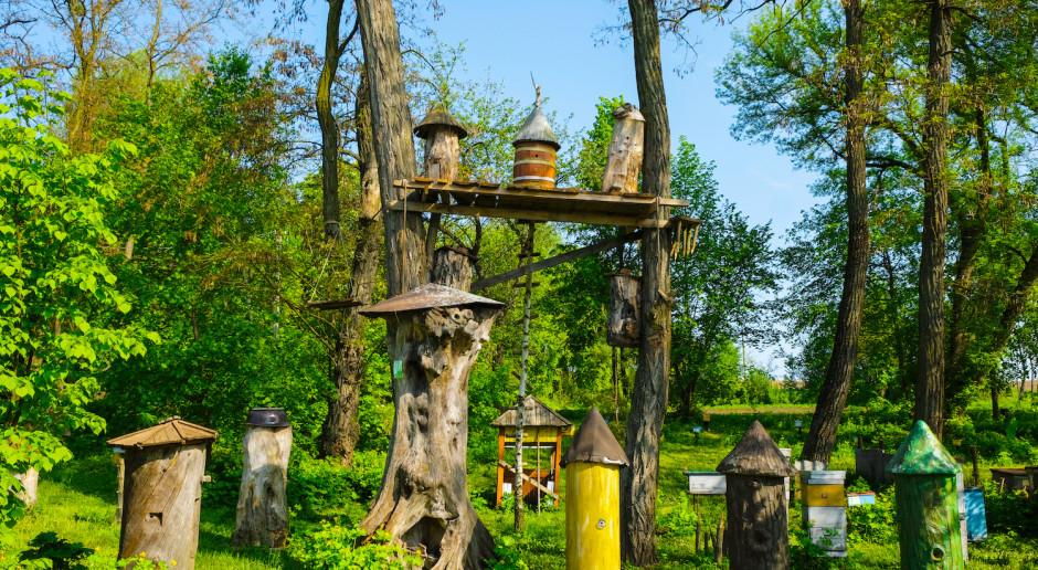 """""""Las otwarty dla pszczół"""" – akcja edukacyjna dla rodzin na Podkarpaciu"""