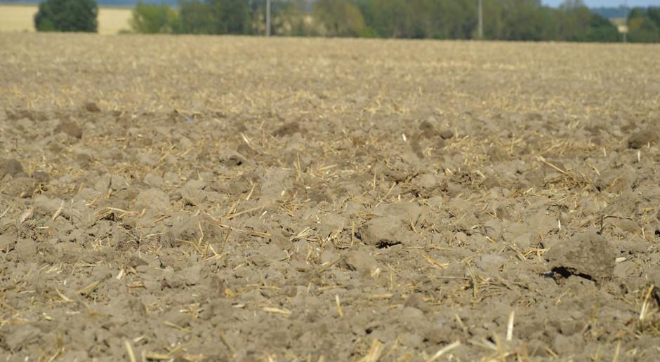 Resztki pożniwne, słomę potnij i wymieszaj z glebą