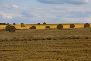 Na Ukrainie zebrano 40 mln ton zboża