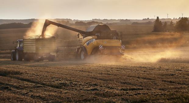 Na Ukrainie zebrano 31,9 mln ton zbóż i bobowatych