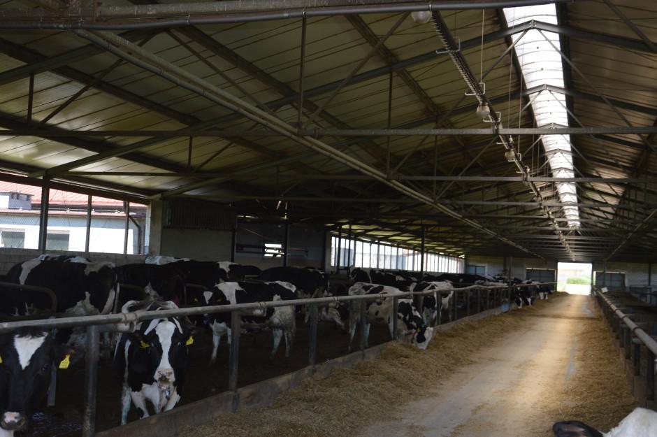Wszystkie krowy w Osowej Sieni są utrzymywane w nowoczesnych oborach wolnostanowiskowych. Obornik pochodzący z tej produkcji jest rokrocznie stosowany na ok. 1000 ha.