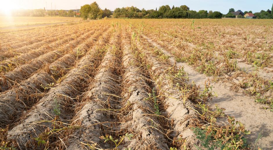 Do końca 2020 r. ma być gotowy plan przeciwdziałania skutkom suszy. Koszt – 14 mld zł