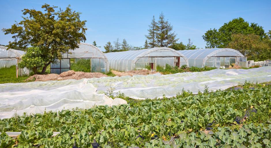 Projekt: producenci żywności będą musieli wcześniej składać informację ze swojej działalności