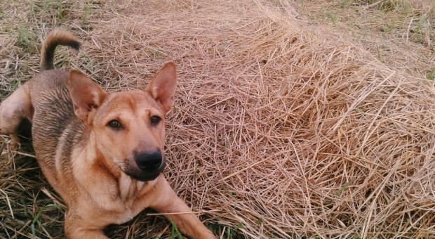 W nocy zastrzelono psa, policja ostrzega właścicieli czworonogów