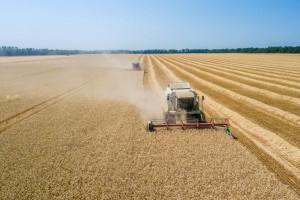Już drugi tydzień ceny zbóż stabilne