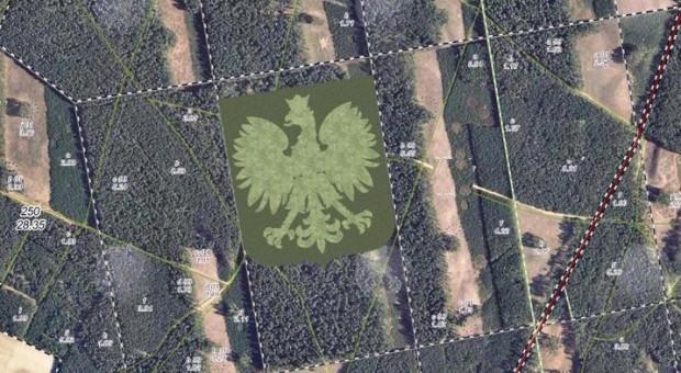 Orzeł z drzew może pobić rekord Guinnessa