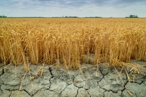 CIR: Ponad 1 mld 87 mln zł strat spowodowanych suszą