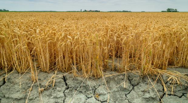 Wielkopolskie: Straty suszowe odnotowano w ponad 68 tys. gospodarstw