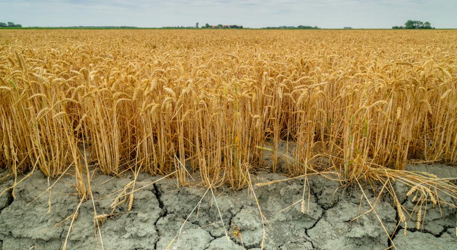 """Kazachstan może """"pożyczyć"""" z Rosji pszenicę na eksport w sezonie 2021/2022"""