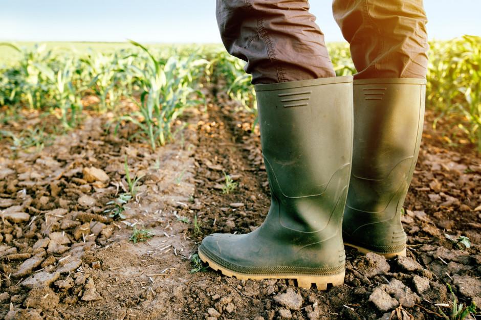 Ardanowski: na początek mamy 0,5 mld zł na wypłaty dla rolników poszkodowanych przez suszę