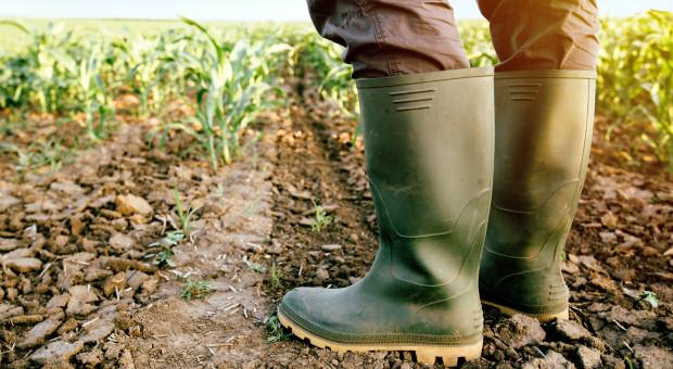 Zachodniopomorskie: ponad 10,6 tys. gospodarstw dotkniętych suszą
