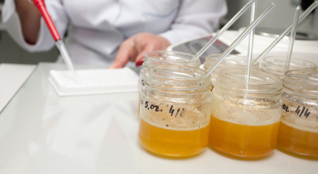Na SGGW wyprodukowano innowacyjny suszony miód