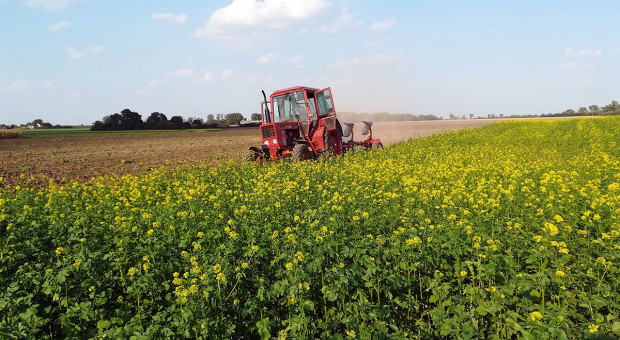 Międzyplony – w trosce o środowisko i plony