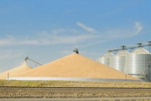 Rosja: Prawie o jedną trzecią mniejszy import produktów rolnych i spożywczych