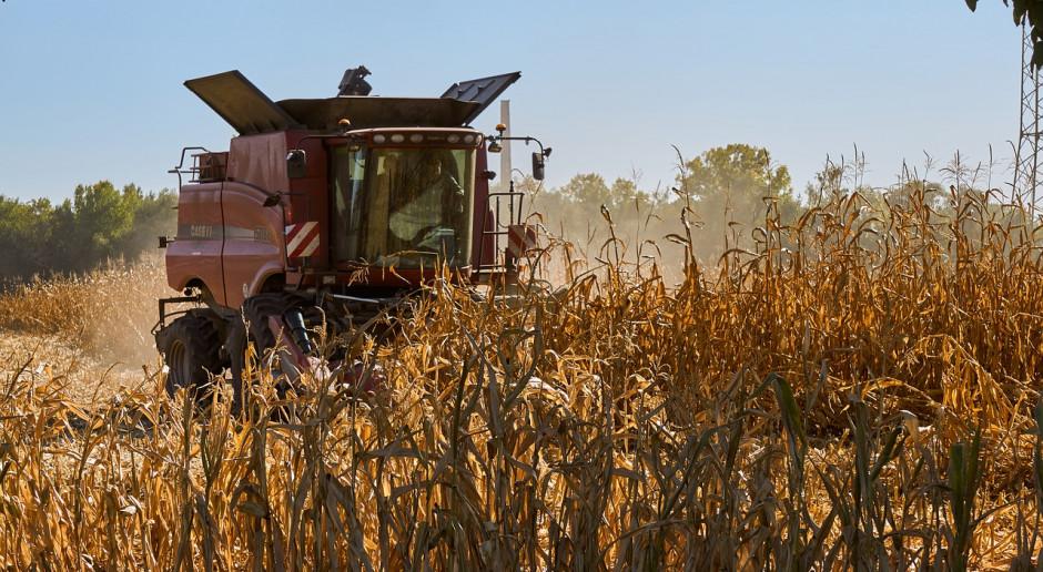 USDA: Spadek prognozy światowej produkcji pszenicy i wzrost dla kukurydzy
