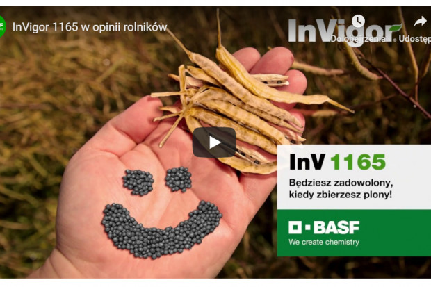 Rzepak ozimy InV 1165 w opinii rolników
