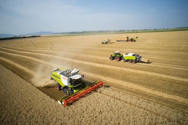 Obawa o przebieg pogody podczas żniw i jej wpływ na jakość ziarna