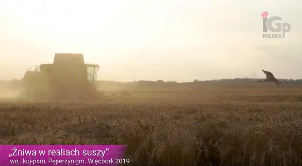 RIBBECK PZO - Żniwa w warunkach suszy 2019
