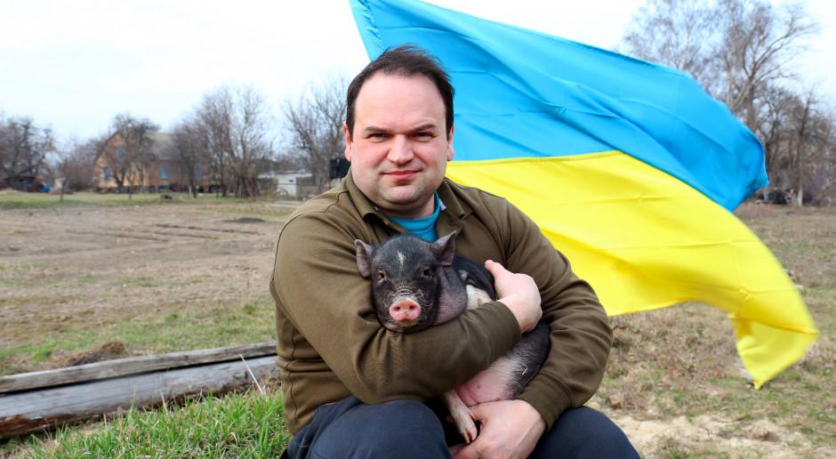 Ukraina: Przy granicy z Polską wykryto ognisko ASF. Ponad 90 tys. świń do utylizacji