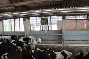 Część ciepła z biogazowni trafia do budynków inwentarskich