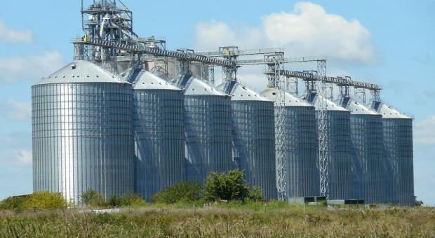 Giełdy krajowe: Trwa spadek cen zbóż
