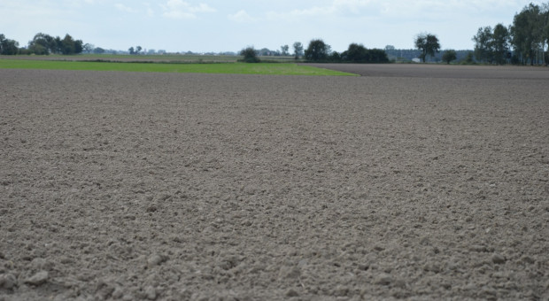 Dawka potasu i fosforu pod pszenicę ozimą