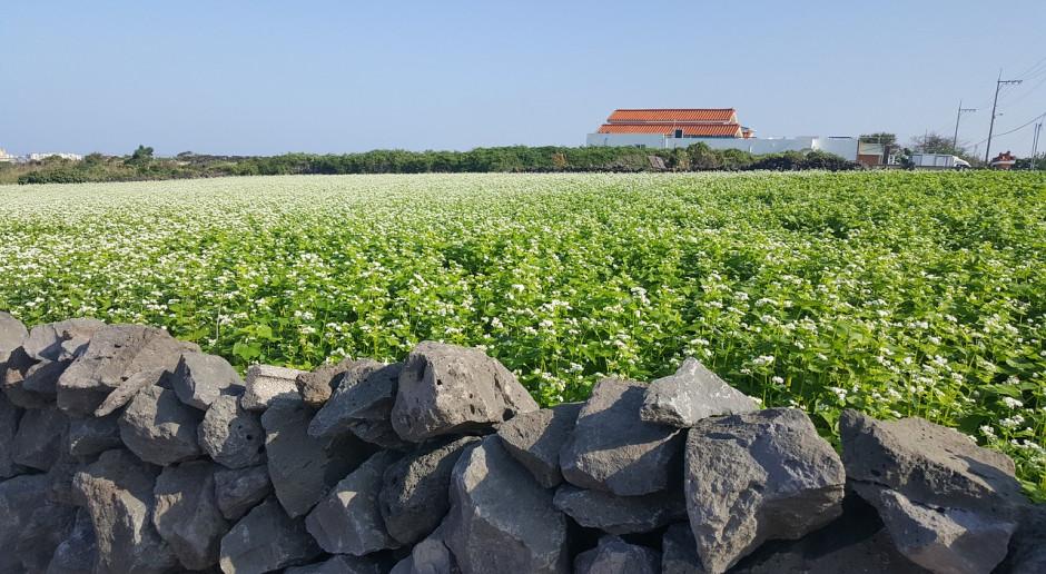 Ukraina: Zboża i bobowate zebrano z 10 mln hektarów