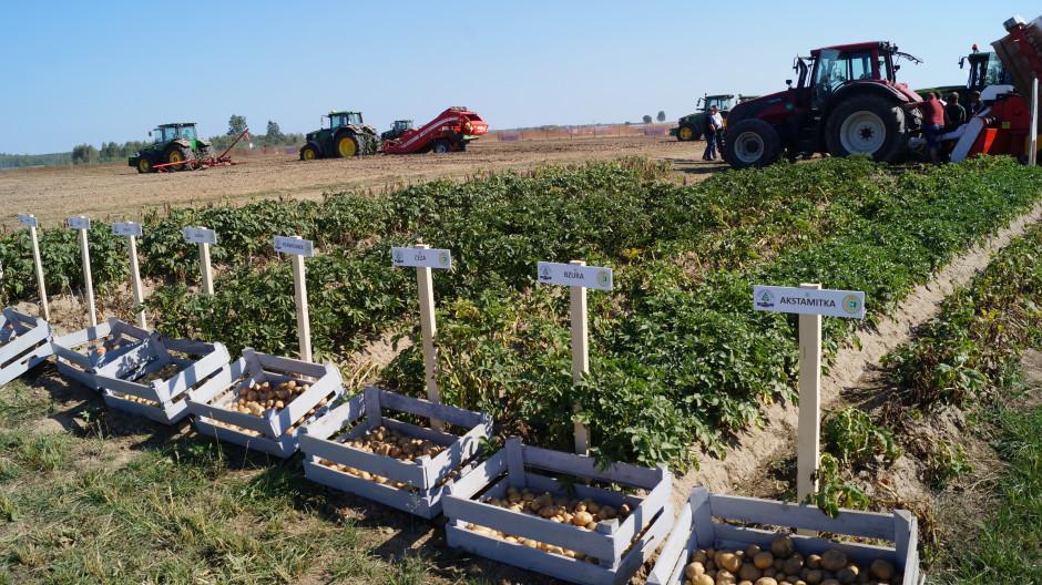 Wydarzenie adresowane jest do producentów ziemniaka z kraju i z zagranicy.