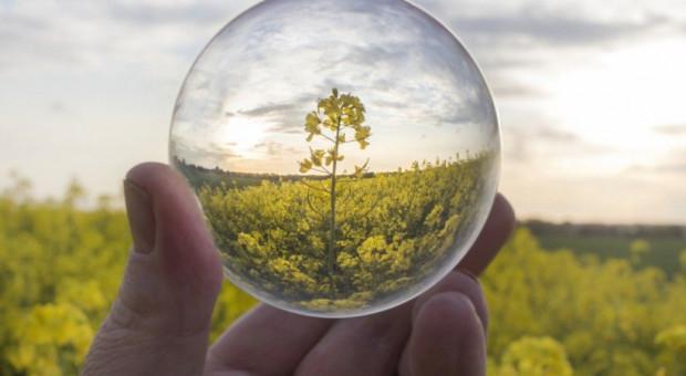 Olej rzepakowy a biopaliwa
