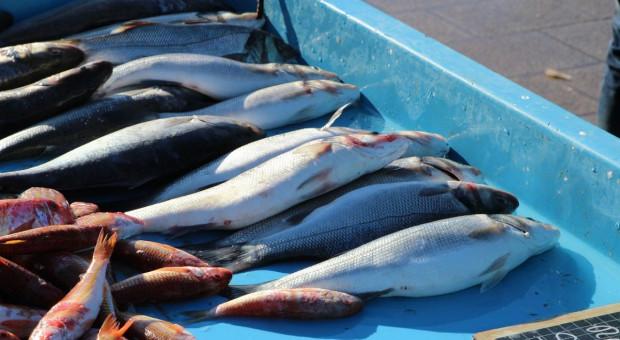 Odpowie za kradzież ryb i znęcanie się nad zwierzętami
