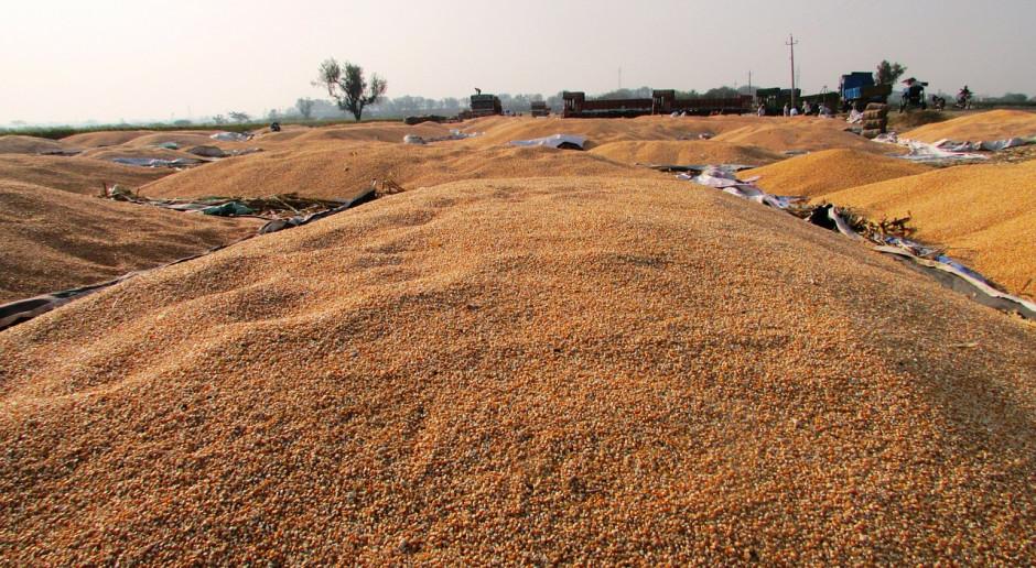 Ukraina sprzedaje dużo kukurydzy do Chin
