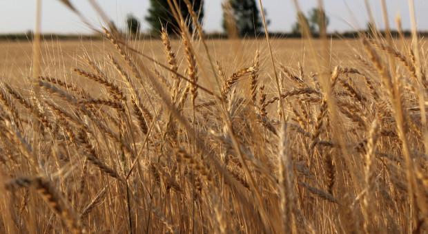 W Kazachstanie zebrano ponad 2,7 mln ton zbóż