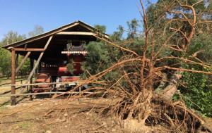 Wiele zniszczeń spowodowały powalone przez wichurę drzewa
