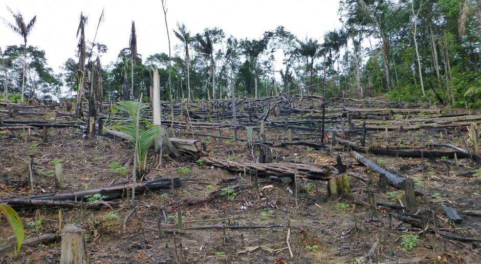 Apel francuskich organizacji o zakaz importu produktów uzyskanych dzięki wylesianiu Amazonii