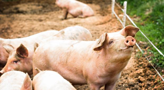 """Zasady """"Dobrostanu zwierząt"""" z PROW poznamy w ciągu dwóch miesięcy"""
