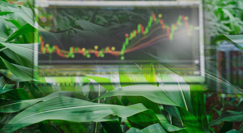 Nowy dołek notowań pszenicy na paryskiej giełdzie MATIF