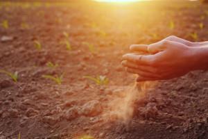 ARiMR: piątek ostatnim dniem na składanie wniosków o pomoc suszową