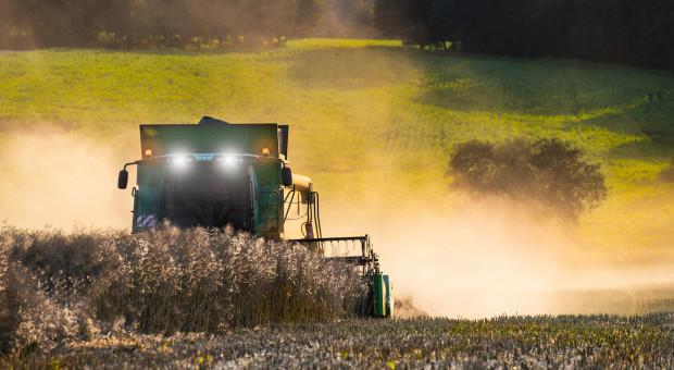 Na Białorusi zebrano rzepak z około 90 proc. areału uprawy