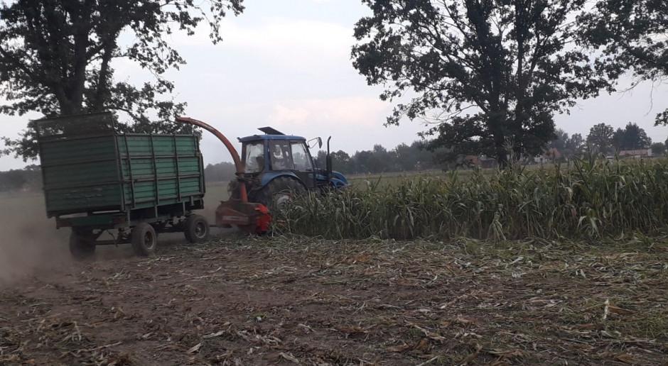 Opolszczyzna: zbiór kukurydzy na kiszonkę w pełni