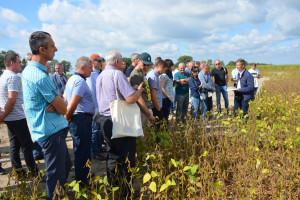 Rozwiązania technologiczne uprawy soi