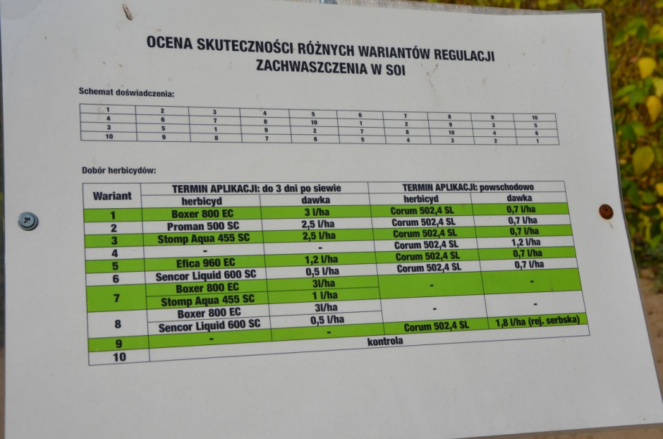 Warianty ochrony soi w badaniach firmy Agrolok, fot. M. Tyszka