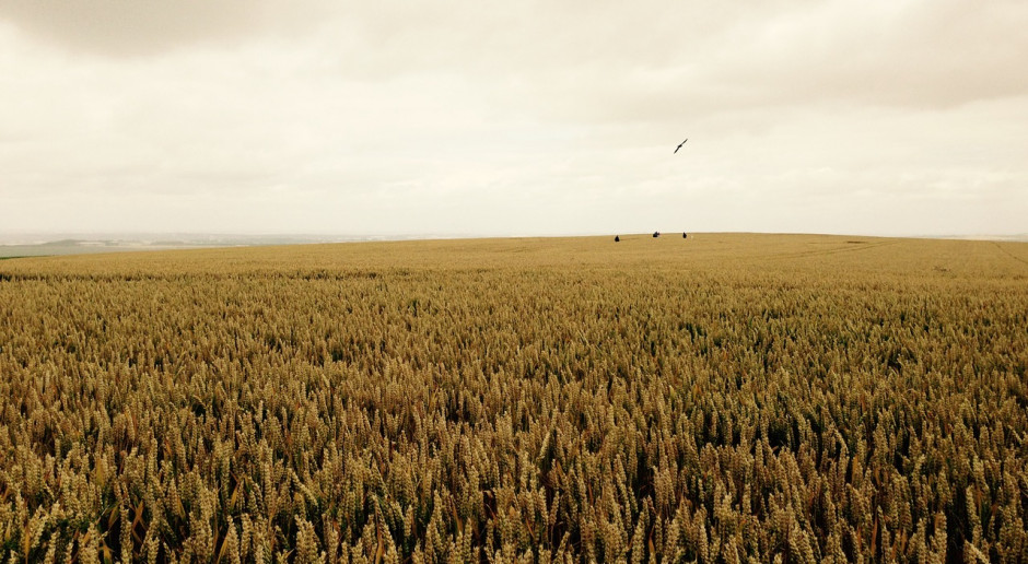 Jedna z największych i najbardziej znanych farm w Anglii została sprzedana