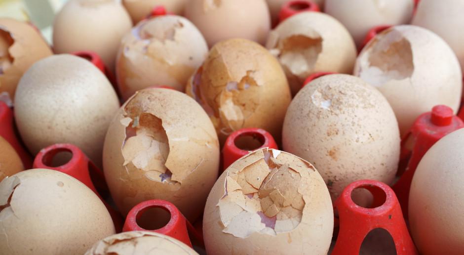 Indonezja: Niszczenie milionów jaj