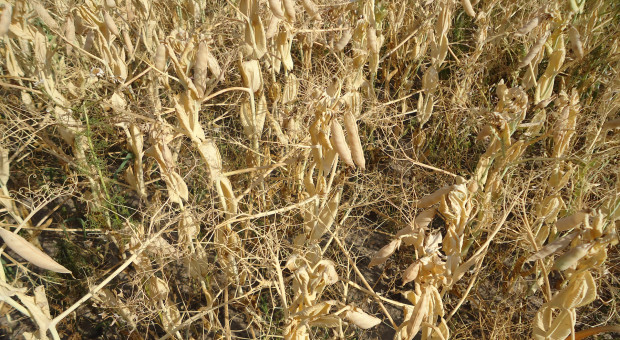 Nowe regulacje dot. szacowanie szkód suszowych