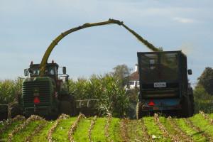 Ukraina: Rozpoczęły się zbiory kukurydzy