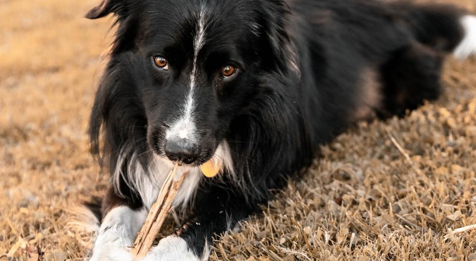 Norwegia: Ponad 25 martwych psów