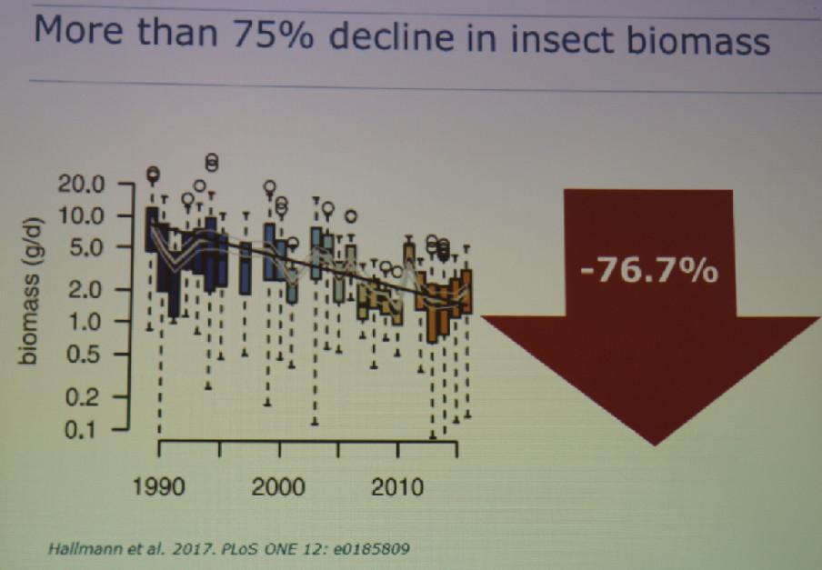 Zmiany w rolnictwie przyczyniły się ponad 75% spadku biomasy owadów.