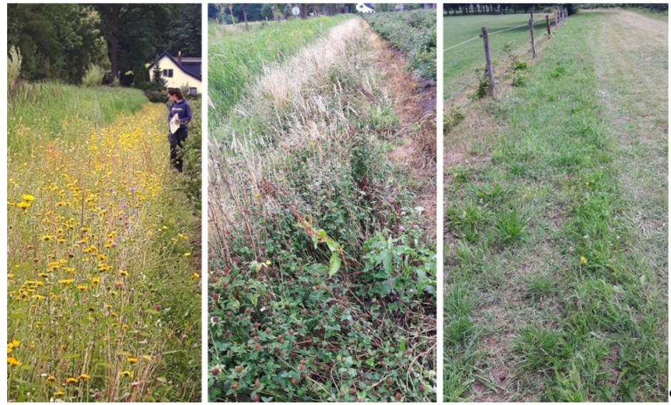 Dobra (po lewej), średnia (środek) i słaba (po prawej) jakość pasa kwietnego. Trzy pasy kwietne wysiano na podobnych glebach przy użyciu dokładnie tej samej mieszanki nasion. Ich jakość różni się znacznie z powodu niewłaściwego gospodarowania (na środku) lub niewłaściwej uprawy gleby przed siewem (po prawej).